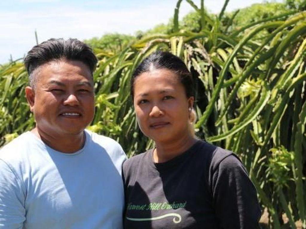 Buah Naga Indonesia Serbu Australia, Petani Lokal Menjerit