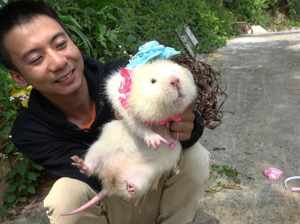 Tikus Bambu Jadi Makanan Lezat Hingga Kemasan Mie Instan Tanpa Gambar Mie