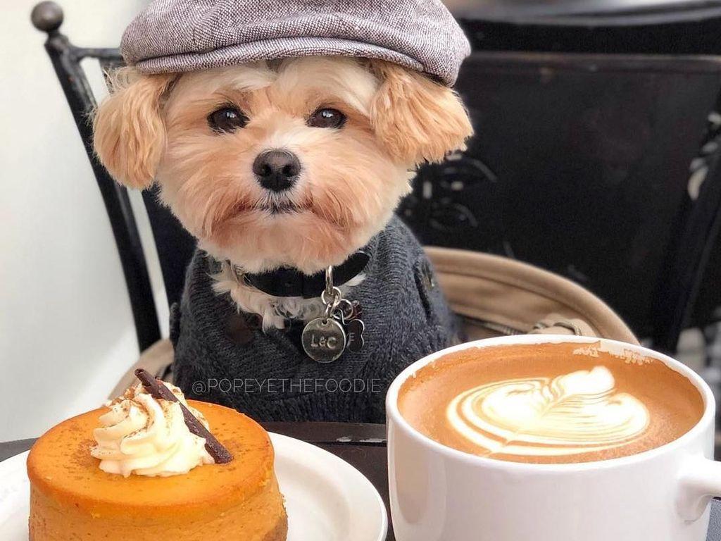 Bikin Gemes! 5 Anjing Foodie Ini Pamer Pose Cute Saat Makan