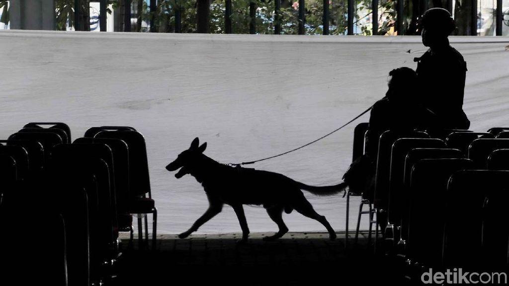 Polisi Bersenjata dan Anjing Pelacak Sisir Katedral