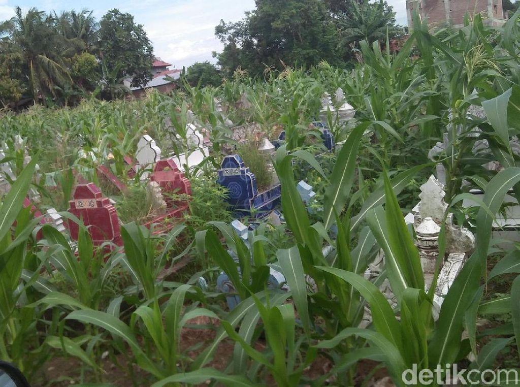 Geger Kuburan di Pinrang Sulsel Disulap Jadi Kebun Jagung