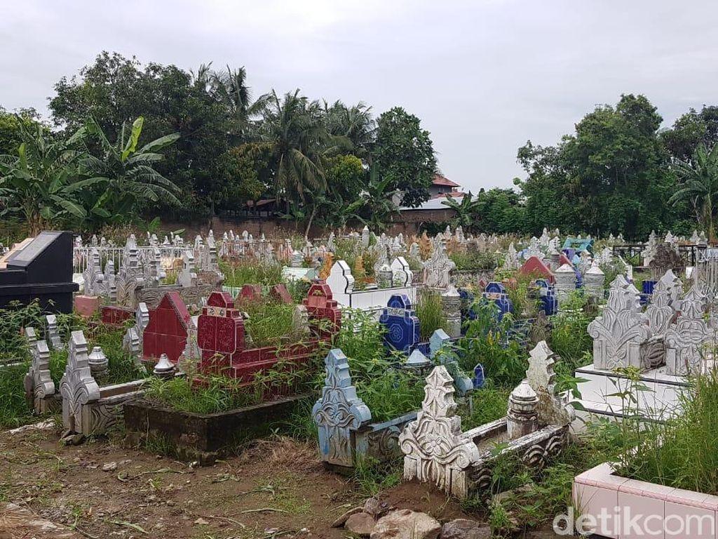 Cling! Kebun Jagung yang Tumbuh di Kuburan Pinrang Sudah Bersih