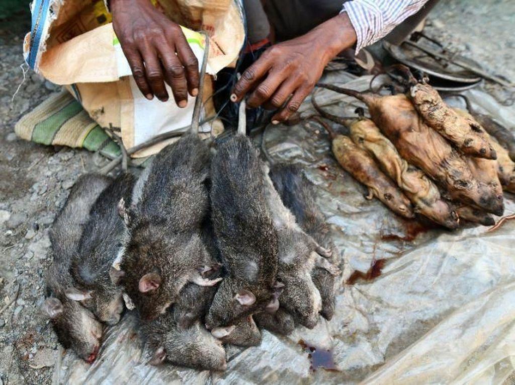Di Pasar Ini Daging Tikus Lebih Populer dari Daging Ayam