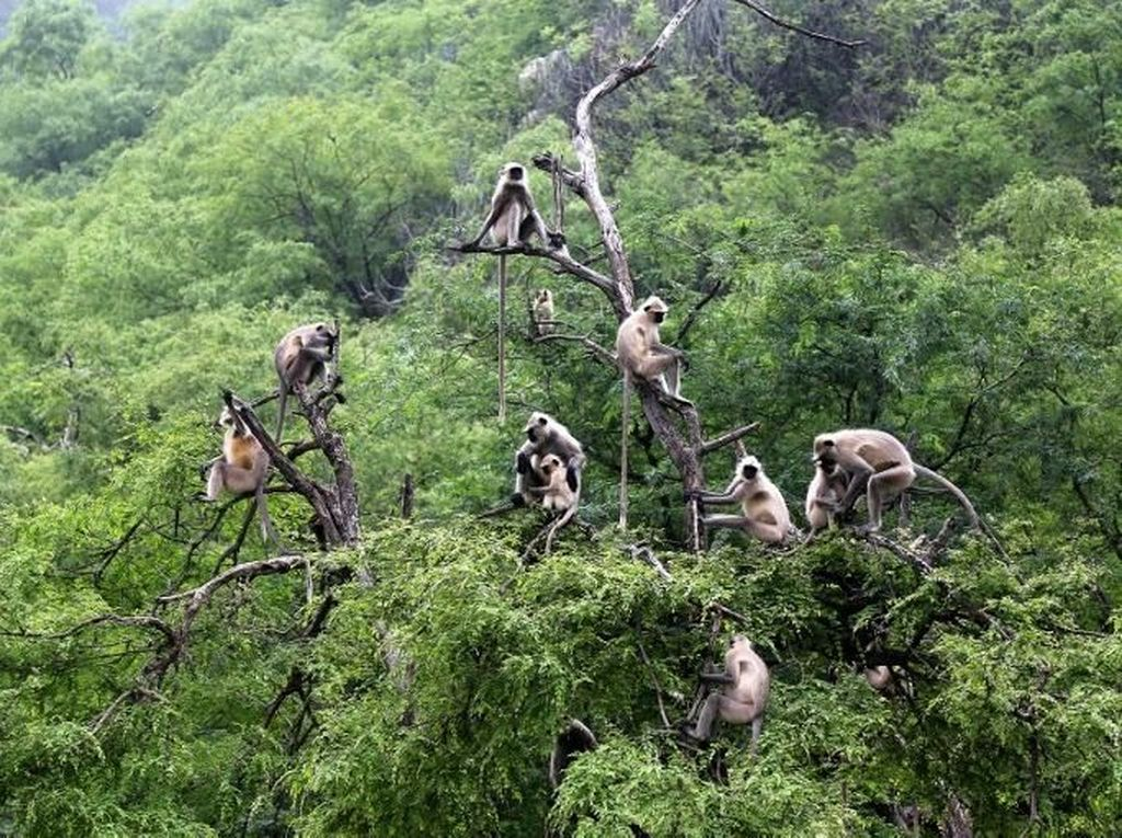 Makan Monyet Langka Sambil Live Medsos, 6 Pria Ditangkap di Vietnam