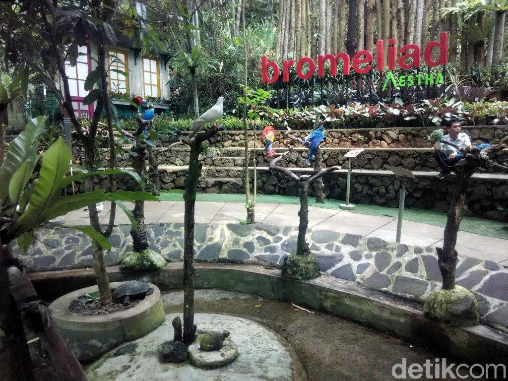 Foto: Liburan Panjang Asyiknya Main Burung di Lembang