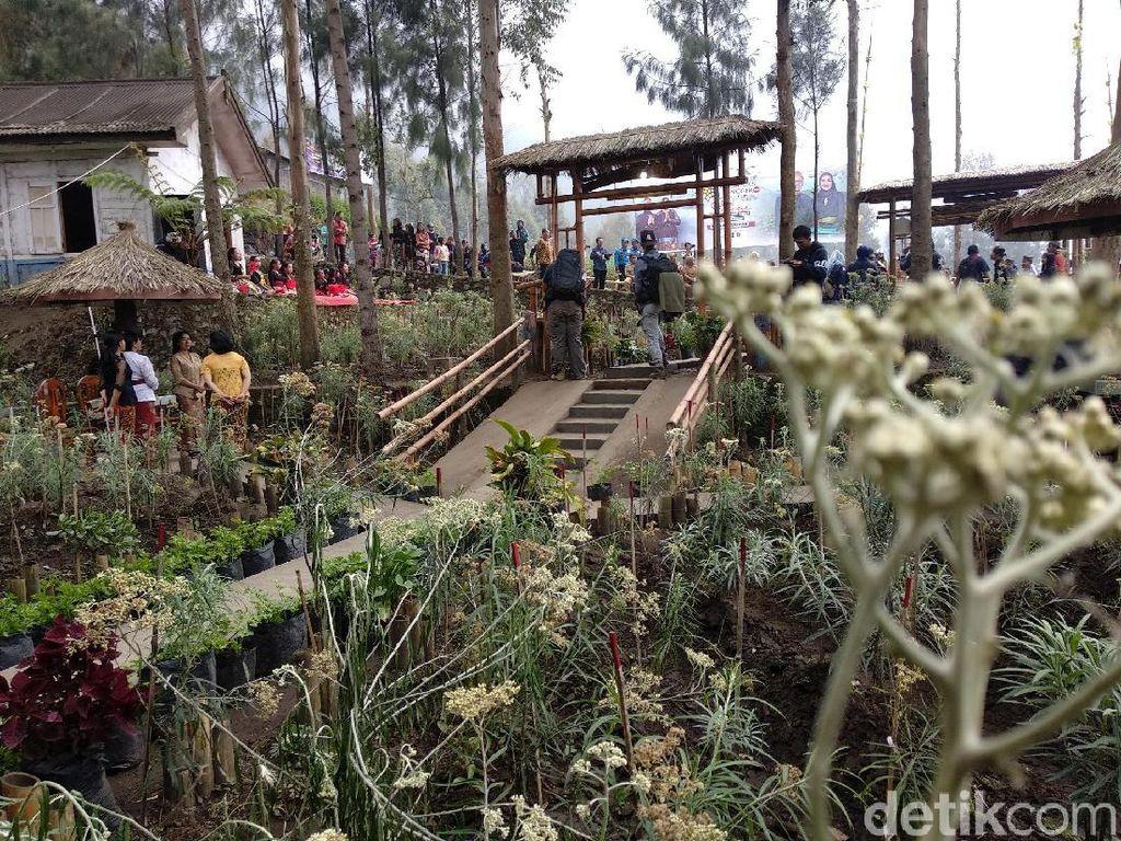 Foto: Ada Kebun Bunga Abadi di Probolinggo