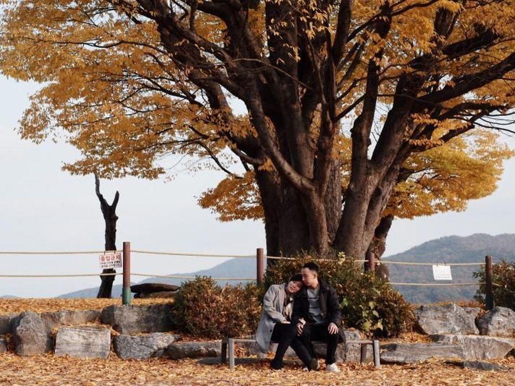 Menikmati Musim Gugur Romantis di Korea Selatan