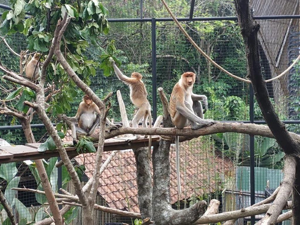 Di Bali Bisa Bertemu Satwa Khas Kalimantan yang Hampir Punah