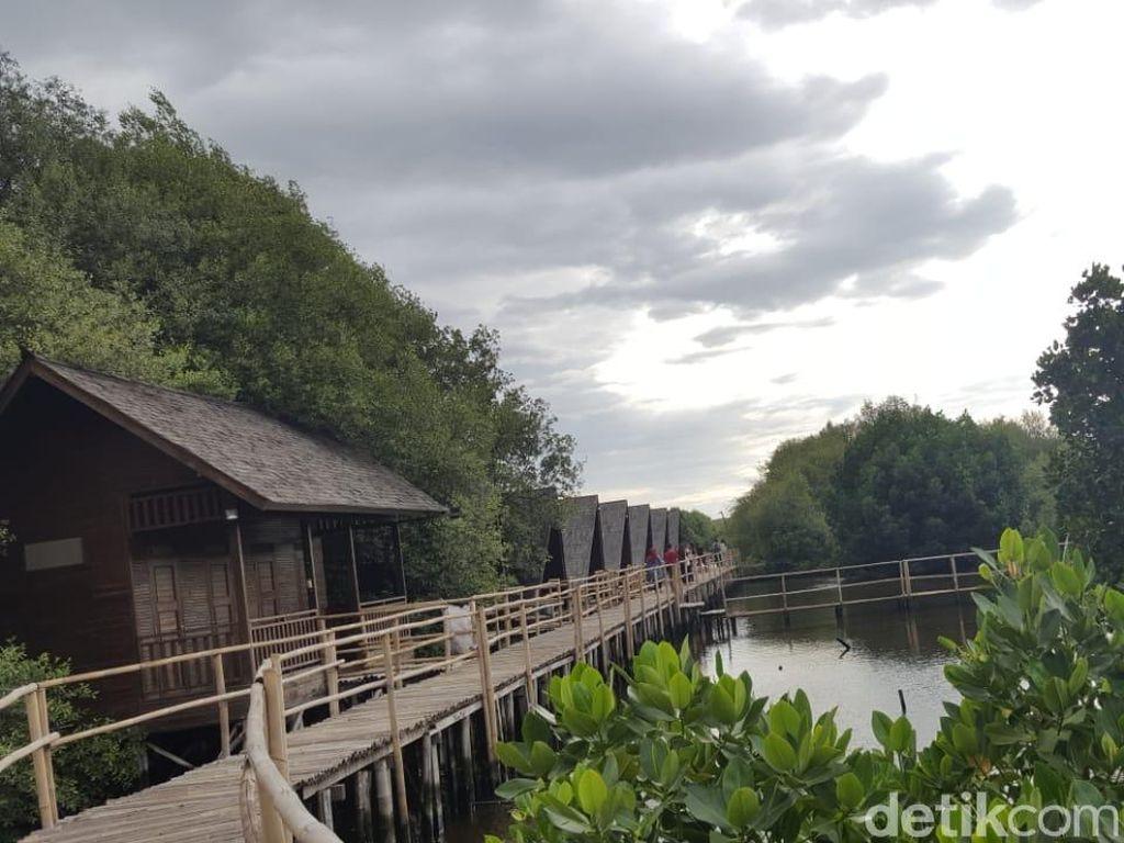 Foto: Jakarta Punya Hutan Mangrove Seindah Ini