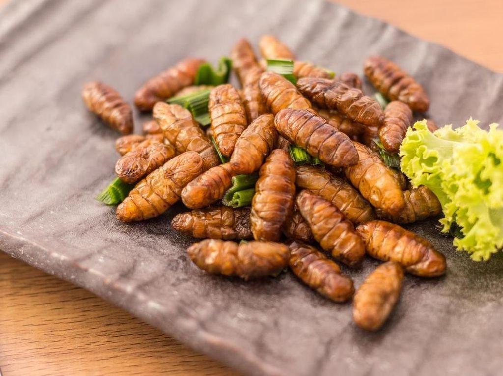 Suka Kuliner Ekstrem, Chef Stefu Pernah Cicip Ular, Kelabang dan Kijang