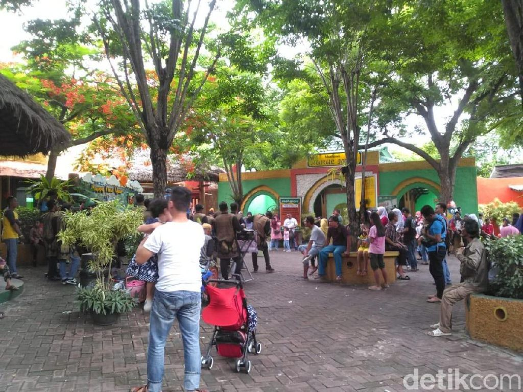 Tahun Baru 2019, Pengunjung Maharani Zoo Lamongan Naik 10 Persen