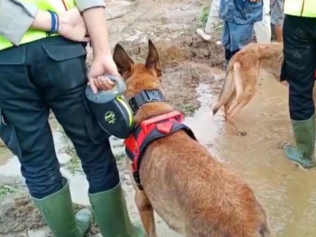 Anjing Pelacak Cari 20 Orang Tertimbun Longsor Sukabumi