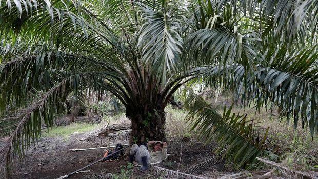 GAPKI: Ekspor Minyak Sawit RI 2018 34,71 Juta Ton, Tumbuh 8%