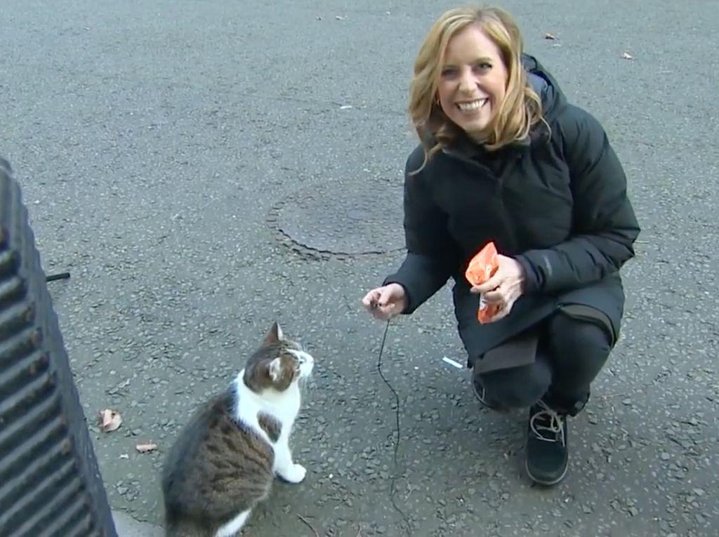 Larry, Si Kucing Pengguncang Kantor PM Inggris