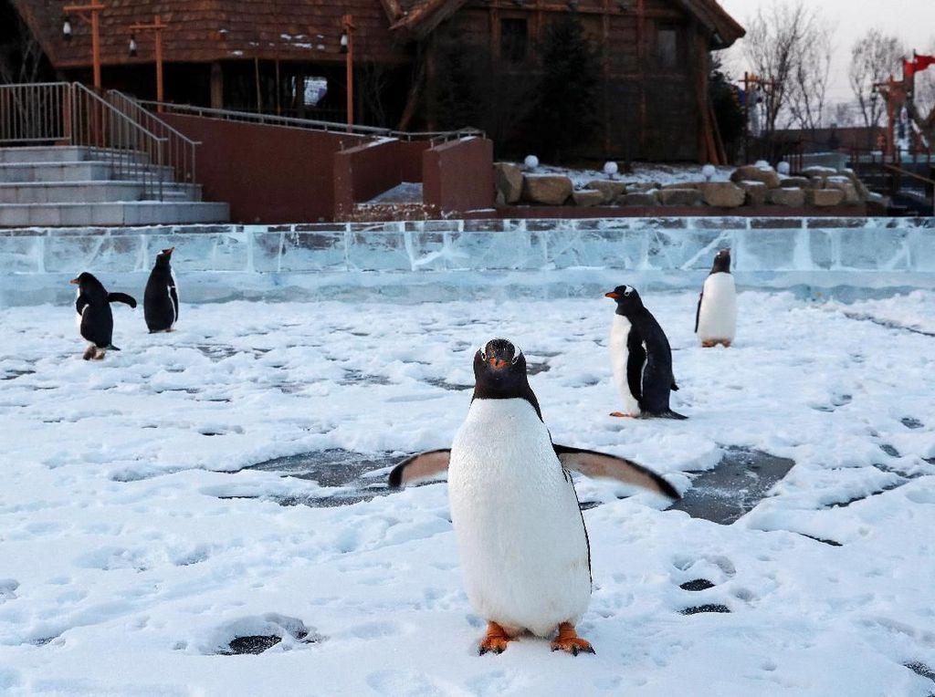 Aksi Lucu Penguin Sambut Pengunjung di Festival Es Harbin