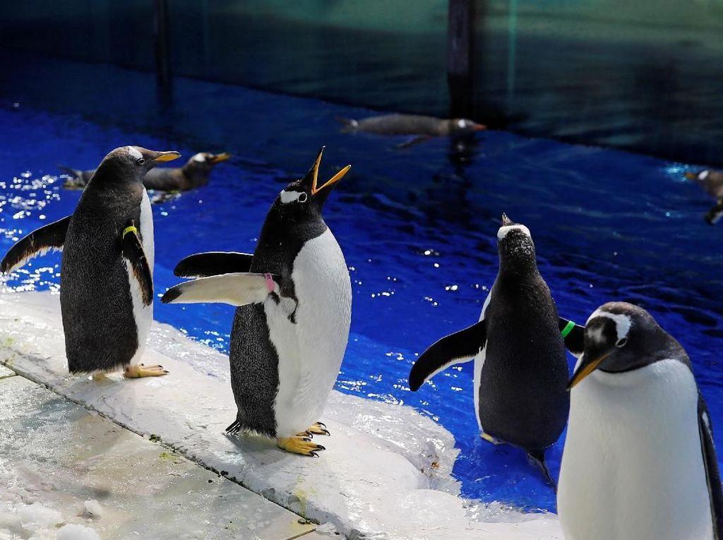Nggak Ada Takutnya... Trio Pinguin Ini Turun ke Jalan