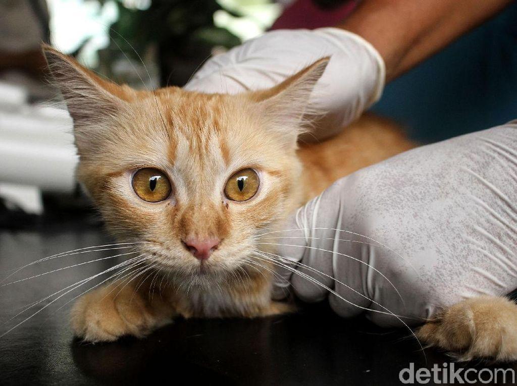 2 Kucing Ini Jadi Hewan Peliharaan Pertama yang Positif Corona di AS