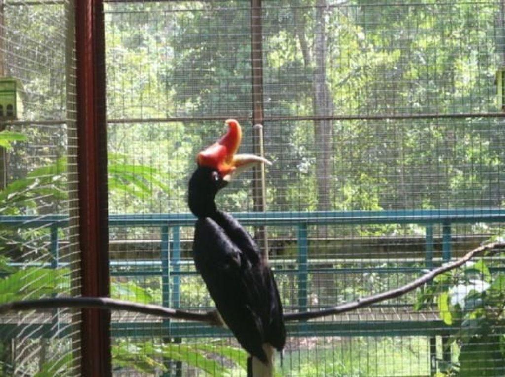 Foto Burung Eksotis Kalimantan di Kotabaru