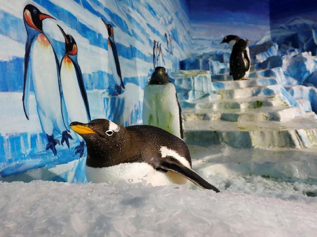 Ketika Dua Penguin Main-main ke Tempat Dinosaurus
