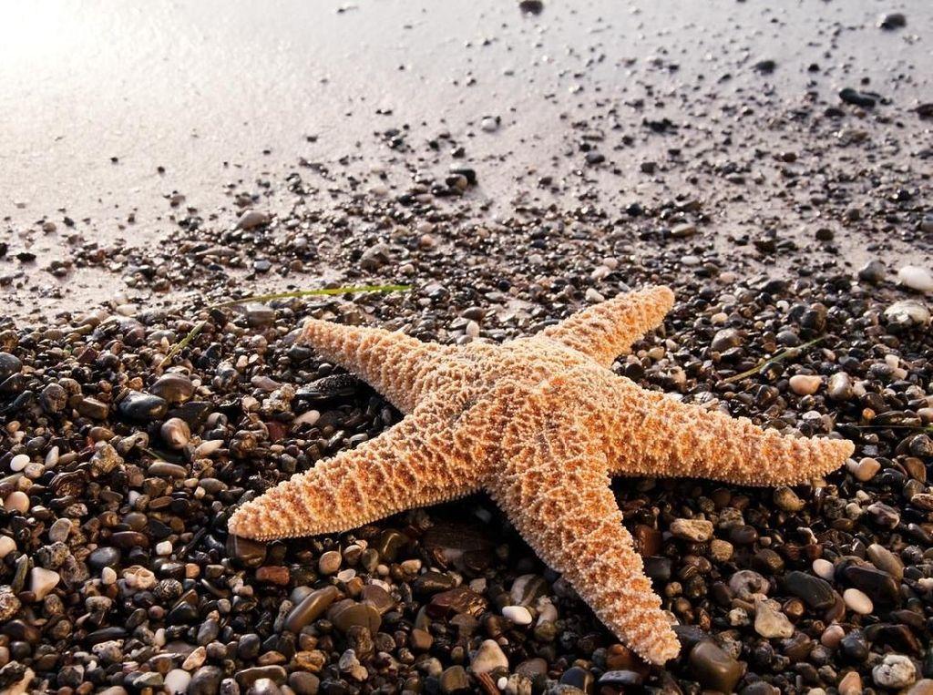 Ini Daftar 5 Spesies Laut Baru di Indonesia