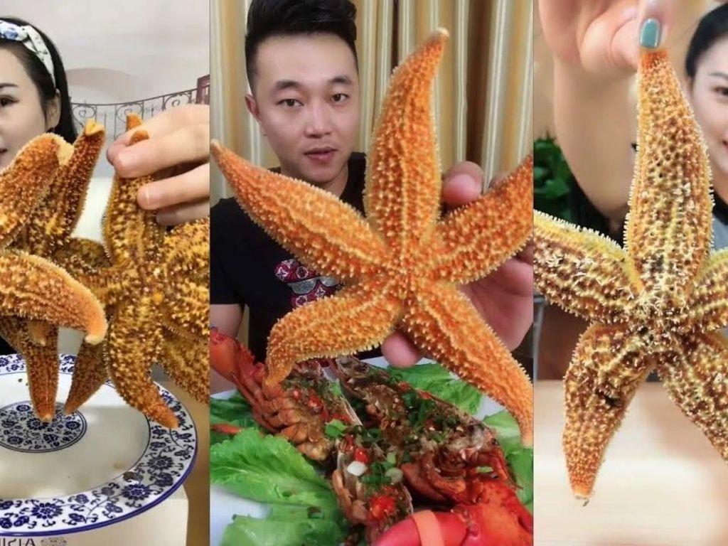 Ya Ampun! Banyak Foodies di China Mukbang Makan Bintang Laut