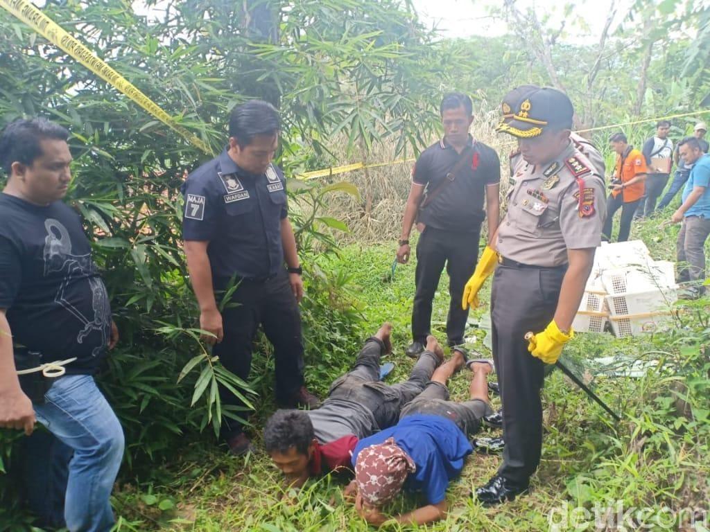 Tangkap 2 Pemburu Hewan Langka, Polisi Selamatkan 79 Kukang Jawa
