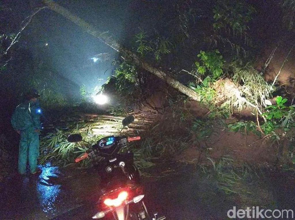 Hujan Deras Disertai Angin Picu Pohon Tumbang dan Longsor di Kediri