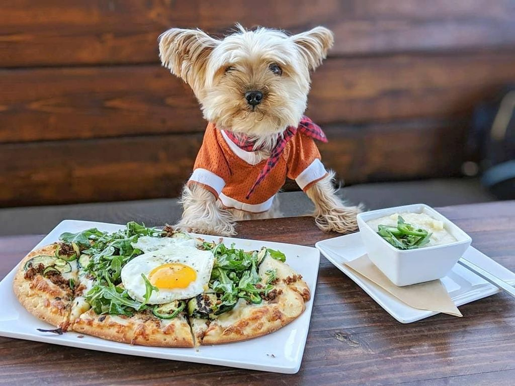 Yuk Kenalan Sama Lennon, Anjing Foodies yang Gemesin Banget!