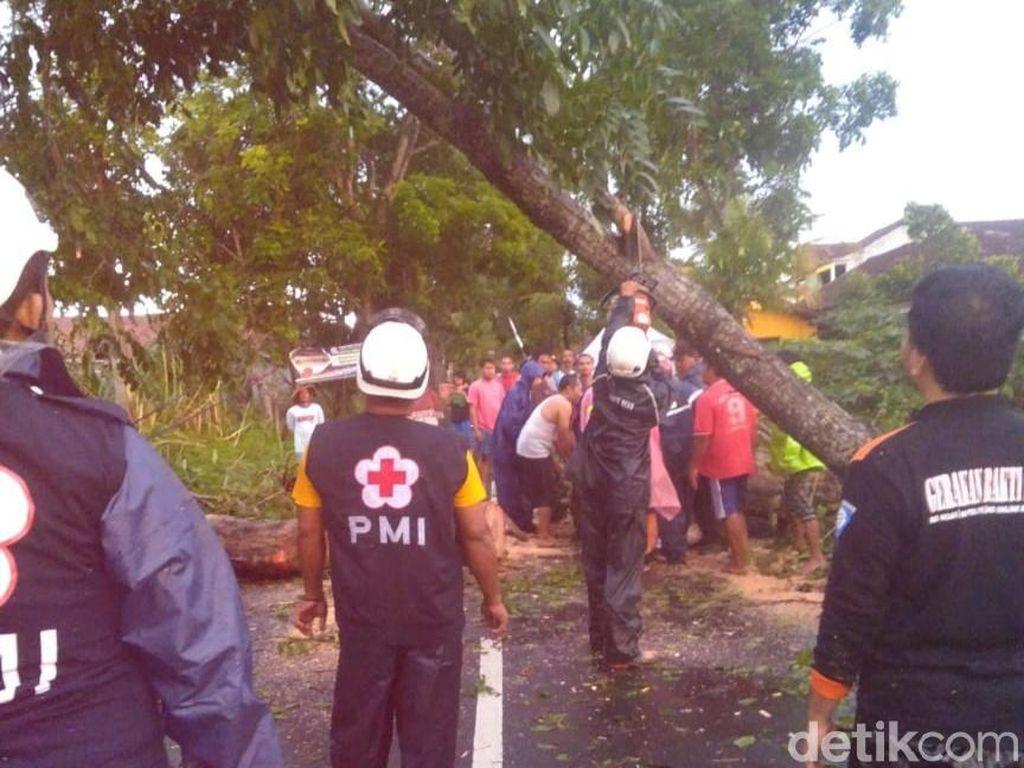 Diterpa Hujan dan Angin Kencang, Sejumlah Pohon di DIY Tumbang