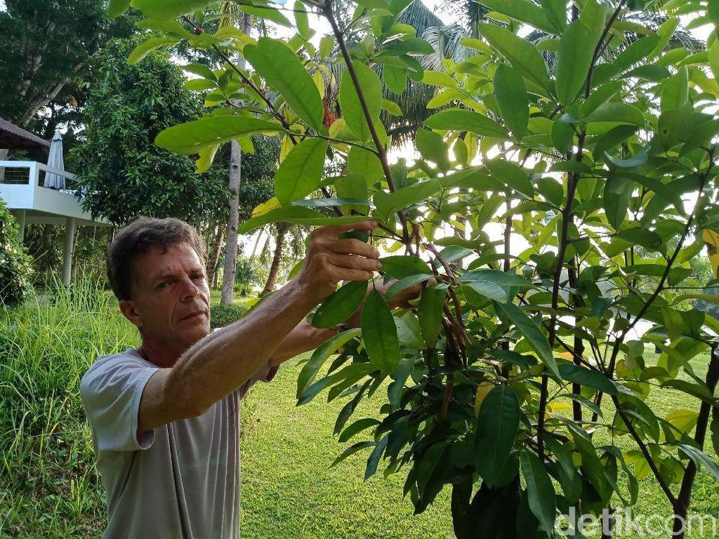 Marco, Bule Kanada 15 Tahun Kumpulkan Pohon Lokal di Pangandaran