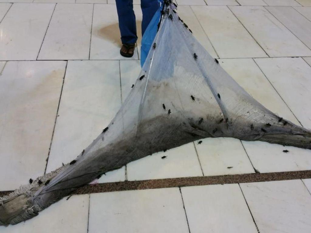 Dubes RI: Petugas Terus Bersihkan Jangkrik dari Masjidil Haram