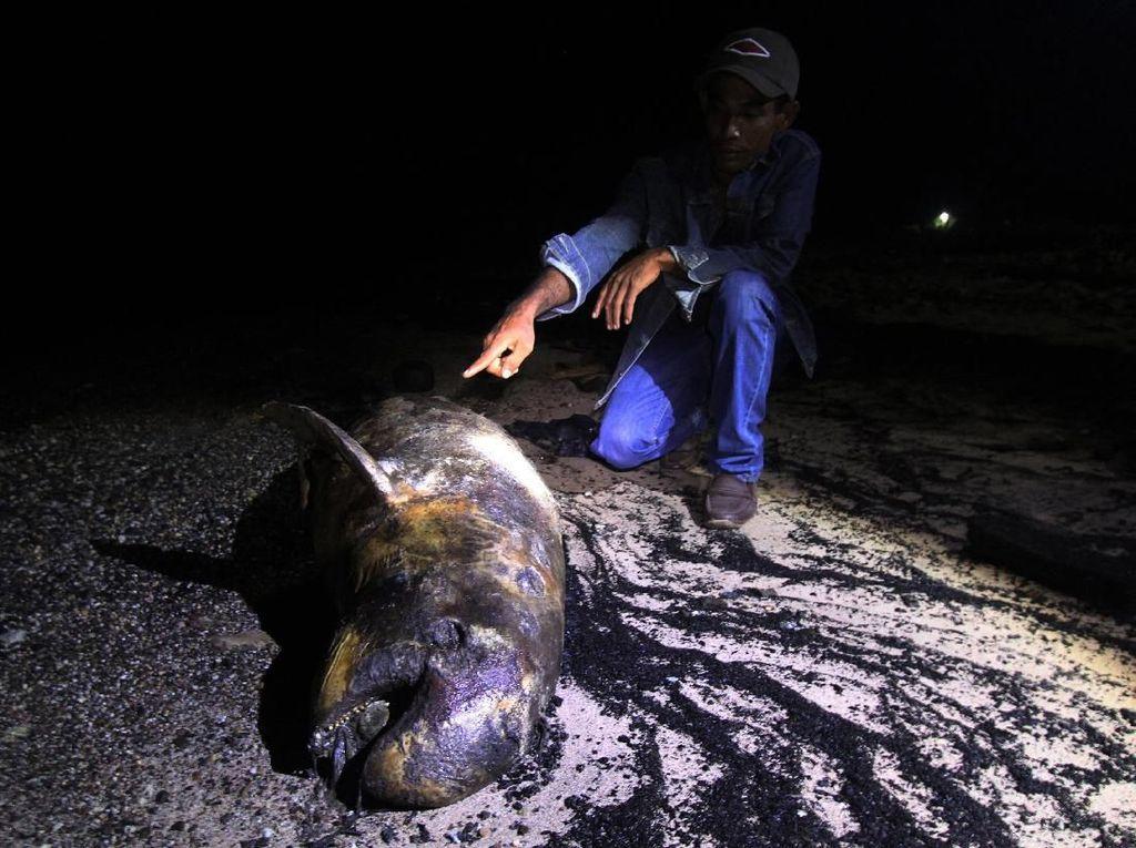 Bangkai Dugong Ditemukan Terdampar di Pantai Riau