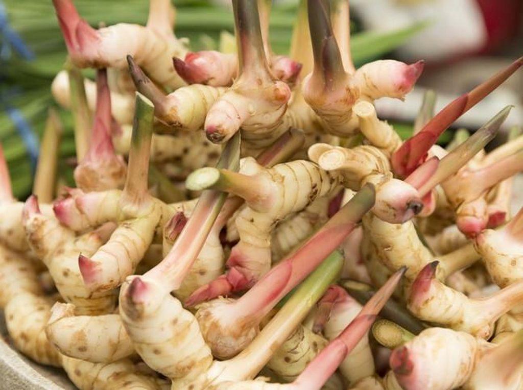 Lengkuas hingga Temu Giring, Bumbu Dapur Sehat yang Bikin Makanan Enak