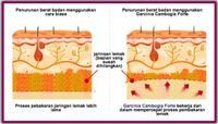 Penurun Berat Badan yang Digunakan Orang Eropa Tersedia di Indonesia