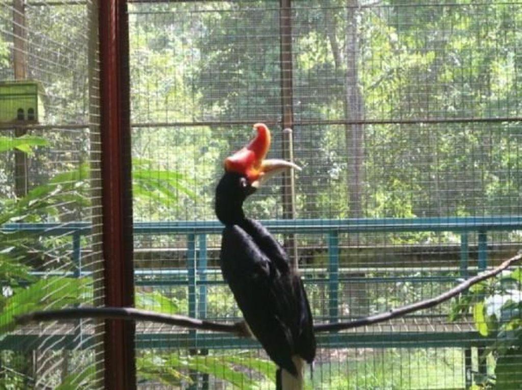 Bertemu Burung Langka di Kalimantan