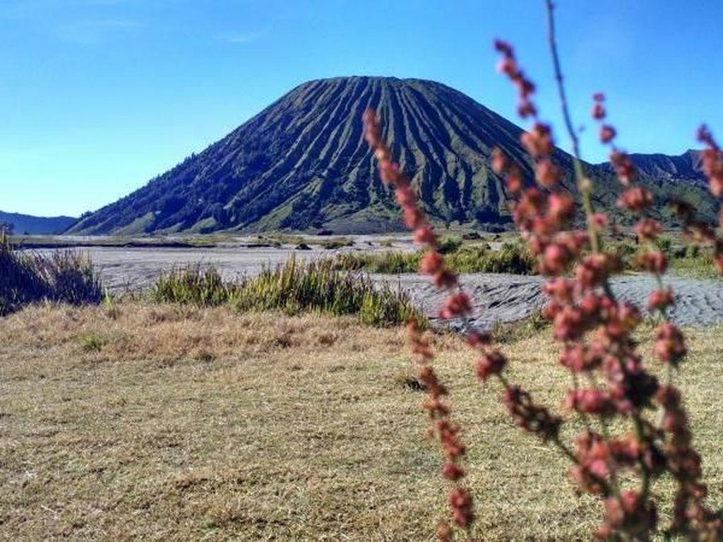 Gunung Bromo Erupsi, Tinggi Kolom Abu 600 Meter
