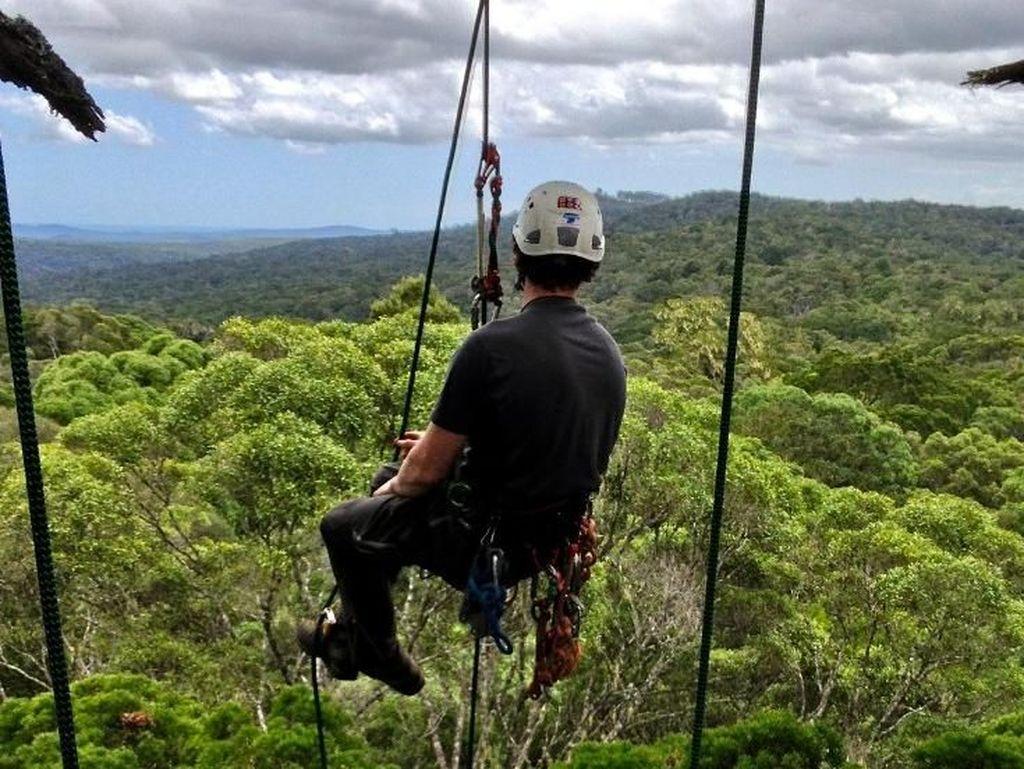 Foto: Mereka Pemanjat Pohon-pohon Tertinggi Dunia