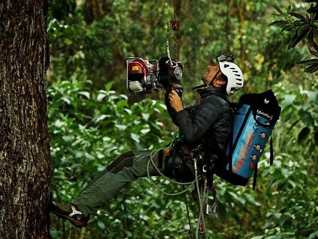 Belum Banyak yang Tahu, Kisah Pemanjat Pohon-pohon Tertinggi Sedunia