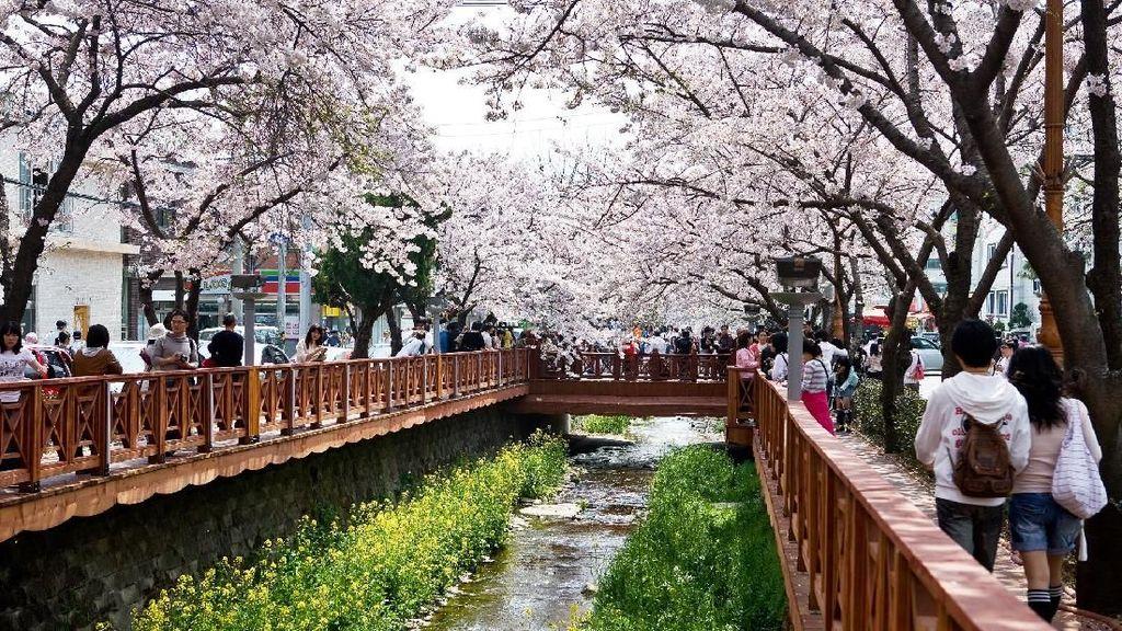 Foto: Gyeongnam, Destinasi Anti Mainstream Korea Selatan