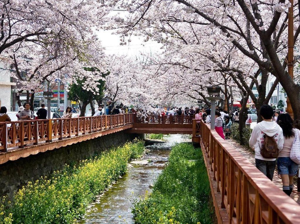 Liburan ke Korea Tahun 2019, Wajib Main ke Gyeongnam