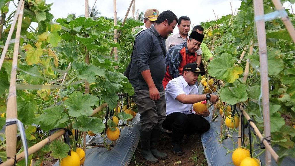 Bupati Tangerang Dukung Petani Hortikultura