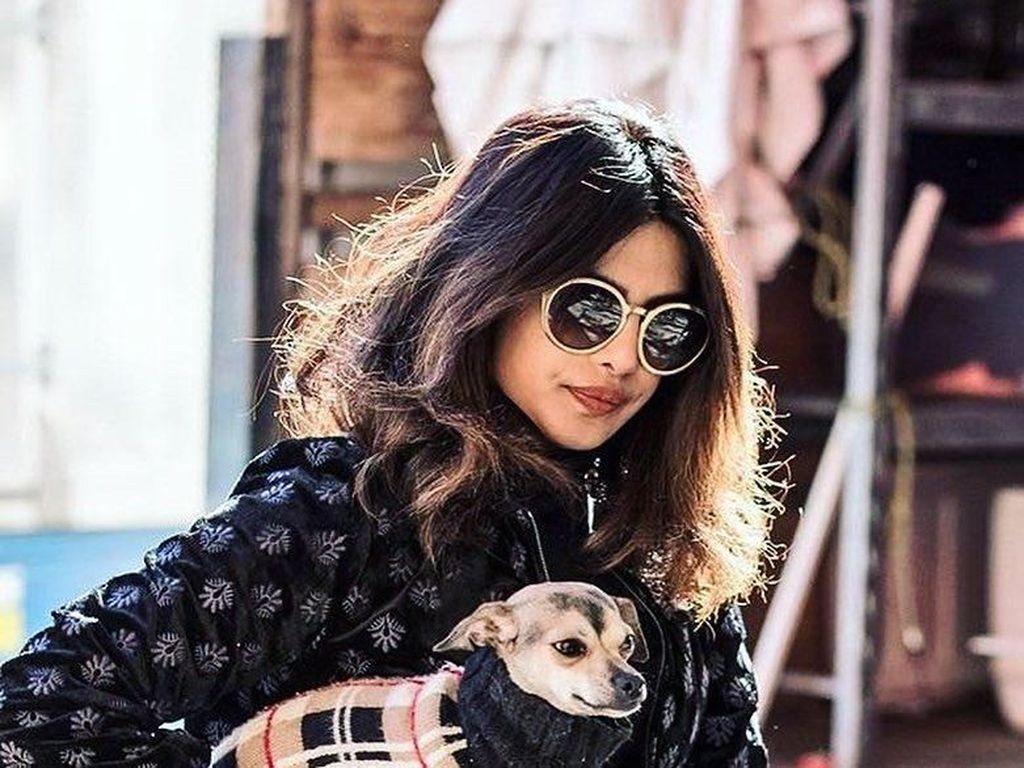 Gaya Mewah Anjing Priyanka Chopra, Jalan-jalan dengan Tas Rp 20 Juta