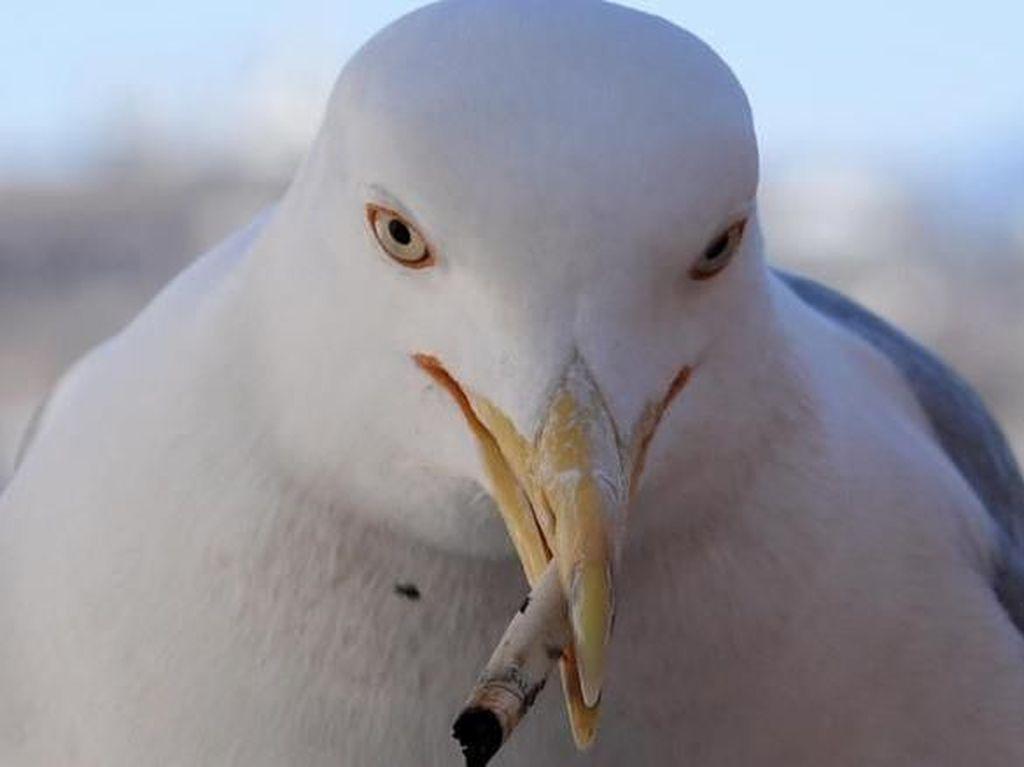 Bukan Sampah Plastik, Puntung Rokok Jadi Polutan Nomor 1 di Laut