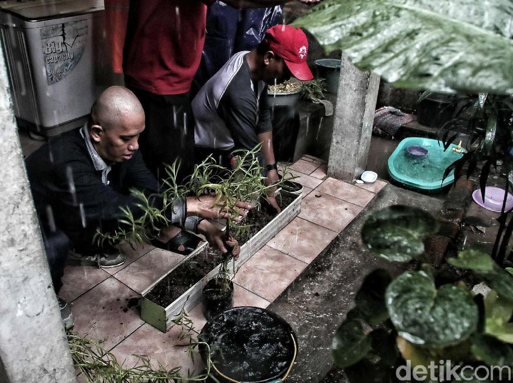 Wow, Ribuan Lavender Ditanam di Marunda untuk Cegah DBD