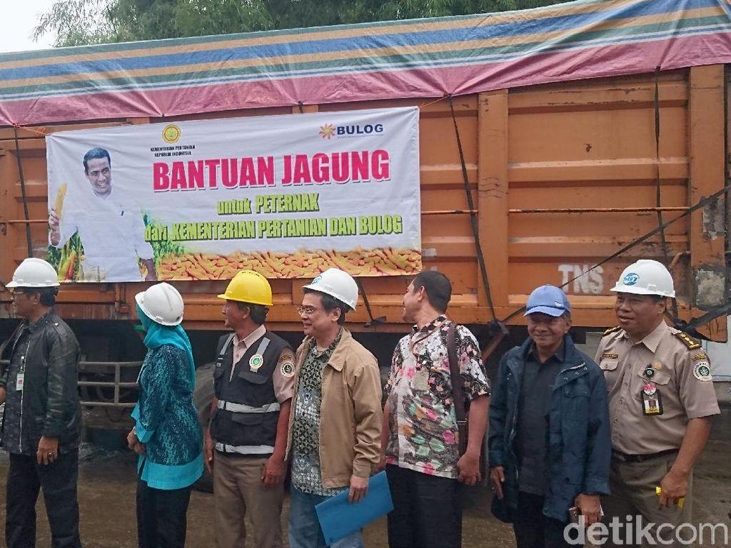 Kementan Sebar 81 Ton Jagung Impor ke Jawa Barat dan Banten