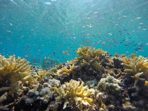 Bumi Makin Panas Laut Masa Depan Diprediksi Berubah Warna
