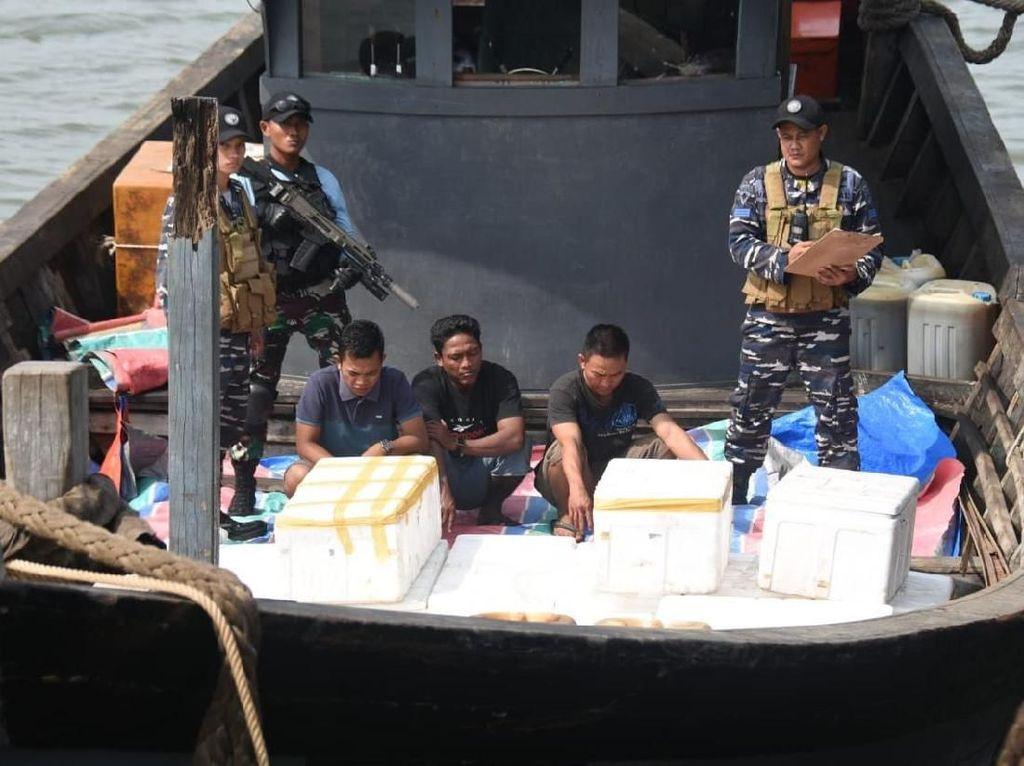 TNI AL Gagalkan Penyelundupan 7.000 Belangkas dari Aceh ke Thailand