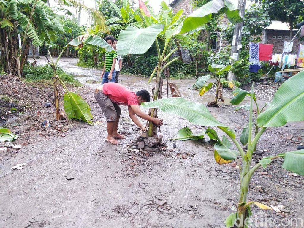 Jalan Rusak Ditanami Pohon Pisang di Semarang Bakal Dibeton