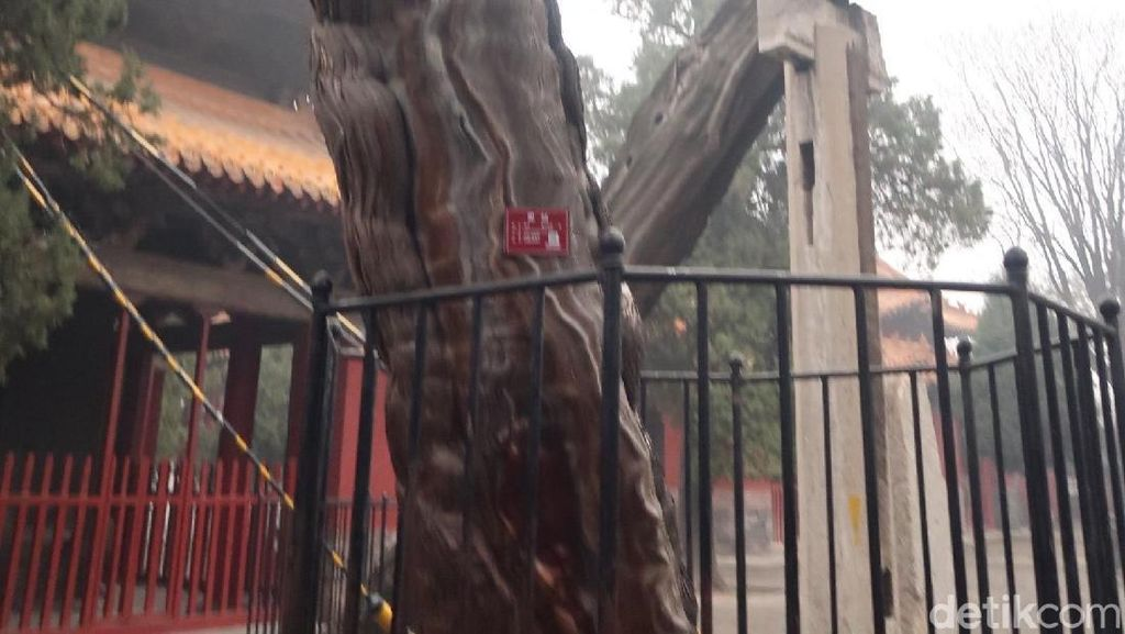 Foto: Pohon Berbentuk Naga karena Dipegang Kaisar China