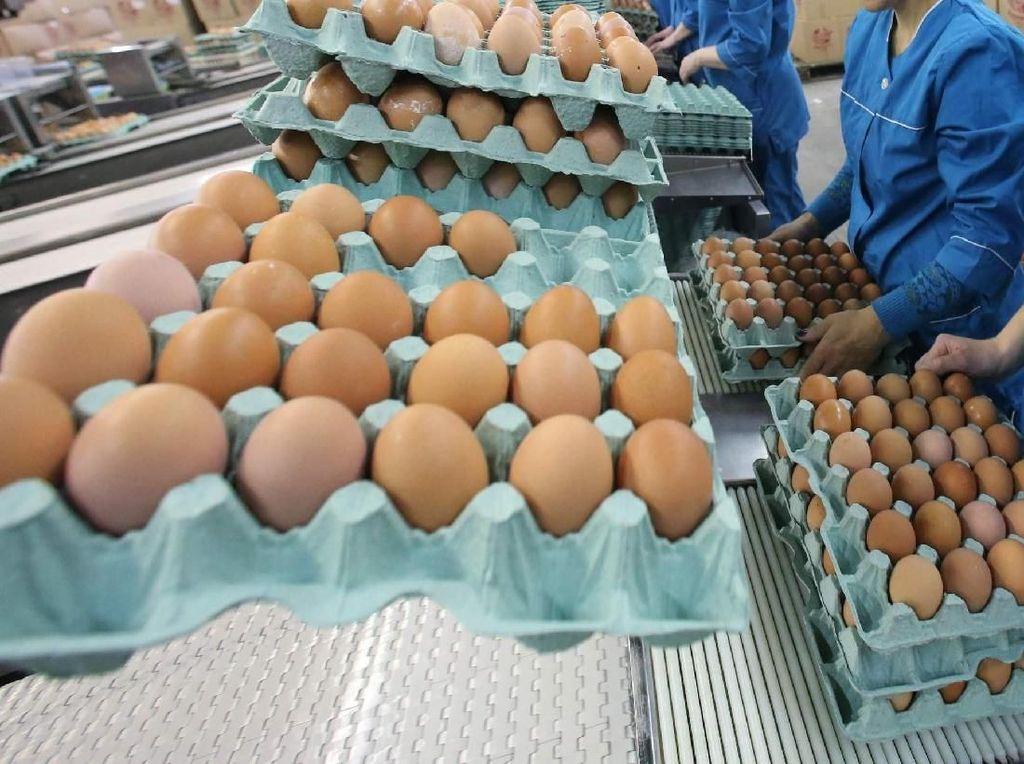 Telur Ayam Modifikasi Ini Bisa Bantu Membunuh Sel Kanker